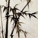2017-6-18 bamboo