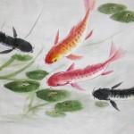2018-1-20 Carp 鯉魚