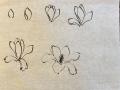 Magnolia_玉兰花